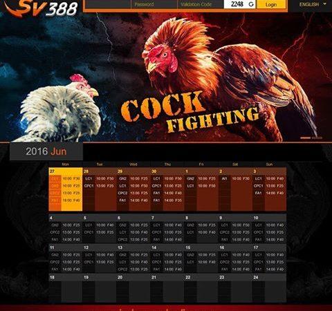 Sabung Ayam SV388 16 November 2016