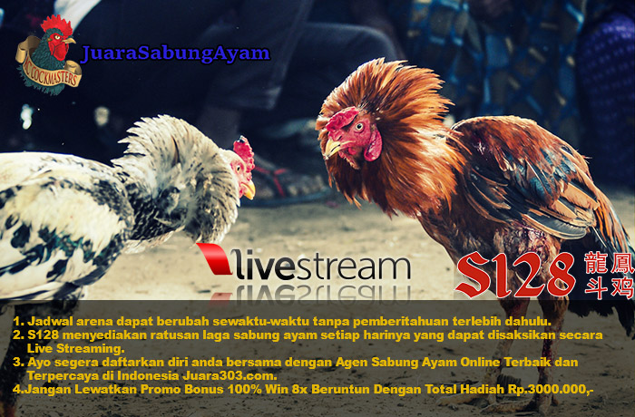 Jadwal Sabung Ayam Online S128 28 November