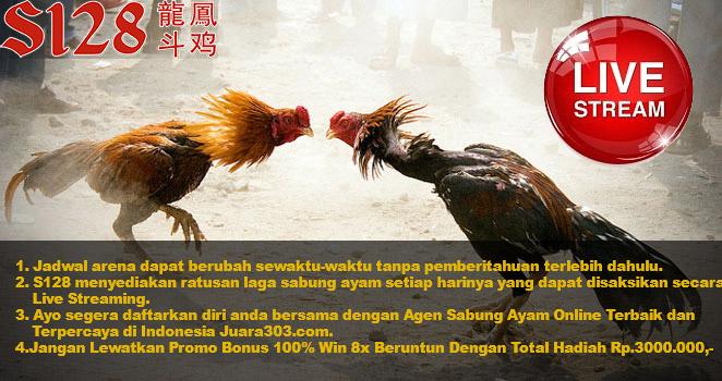Jadwal Sabung Ayam Online S128 27 November