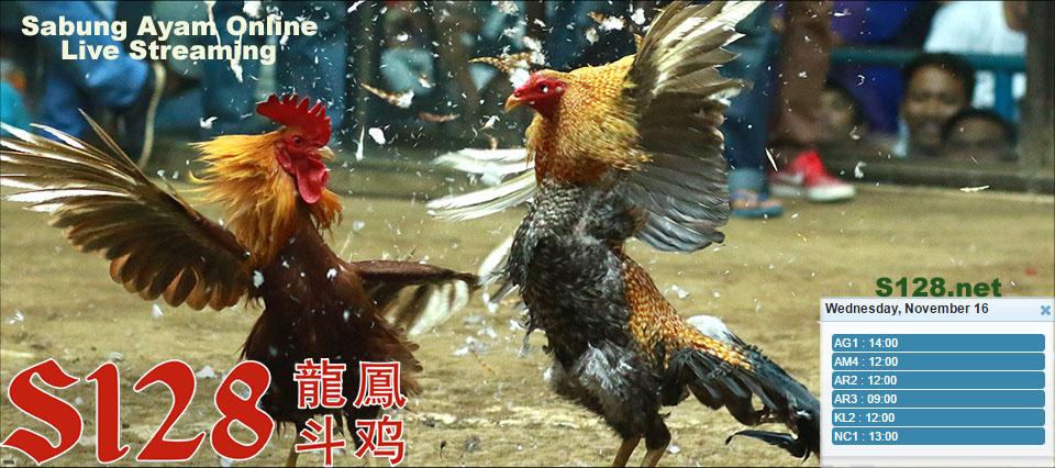 Jadwal Sabung Ayam S128 16 November