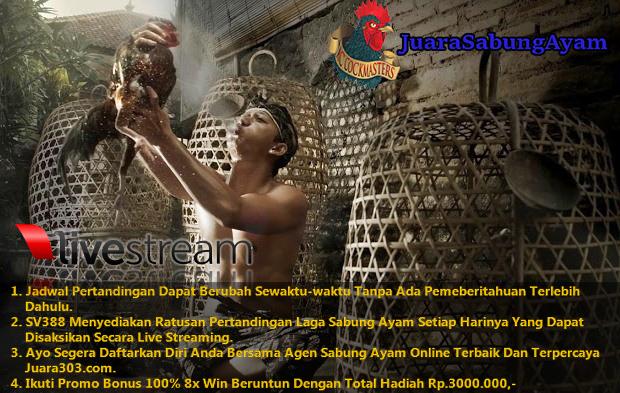 Jadwal Sabung Ayam Online SV388.com 30 November 2016
