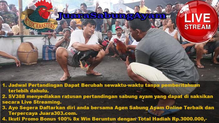 Jadwal Sabung Ayam Online SV388.com 27 November