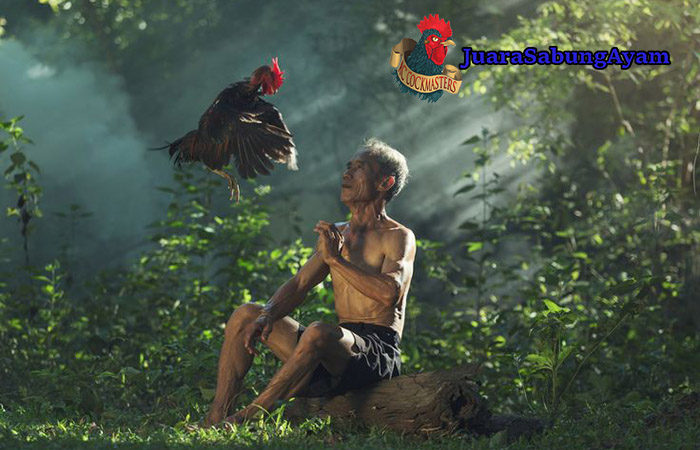 Ayam Laga TerPopuler di Seluruh Dunia