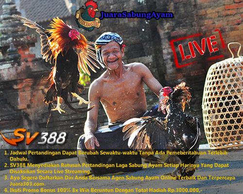 Jadwal Sabung Ayam SV388