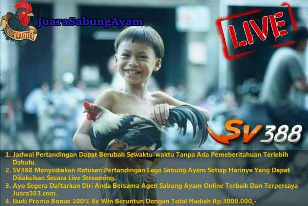 Jadwal Sabung Ayam Online SV388.com 12 Desember 2016