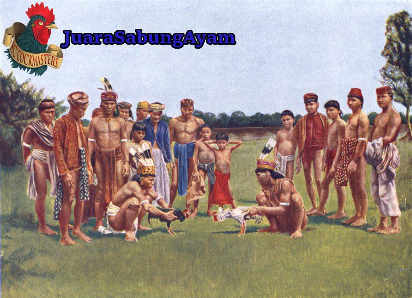 Sabung Ayam Suku Dayak
