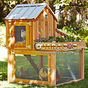Mencegah Berkembangbiaknya Lalat pada Kandang Ayam Aduan
