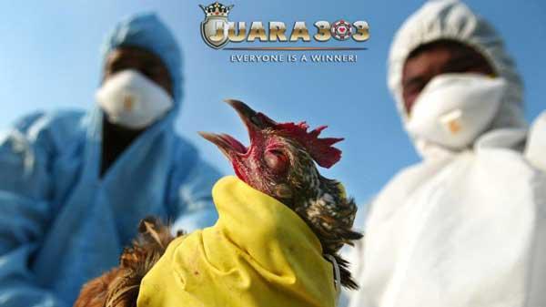 Kematian massal pada ayam