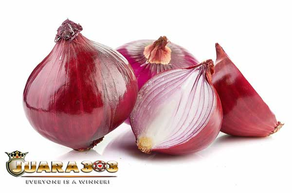 Selain Bawang Putih, Ternyata Bawang Merah juga Bermanfaat untuk Ayam Aduan Lhooo!