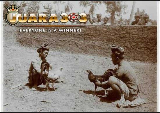 Telusuri Sejarah Sabung Ayam di Bugis
