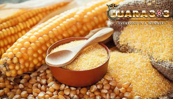 manfaat jagung untuk ayam bangkok aduan - sabung ayam online