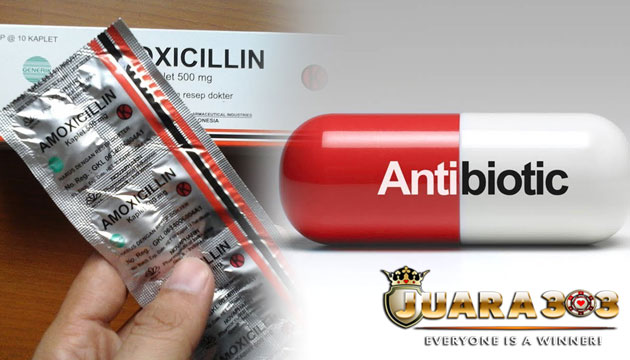 manfaat pemberian obat amoxicillin untuk ayam bangkok - sabung ayam online