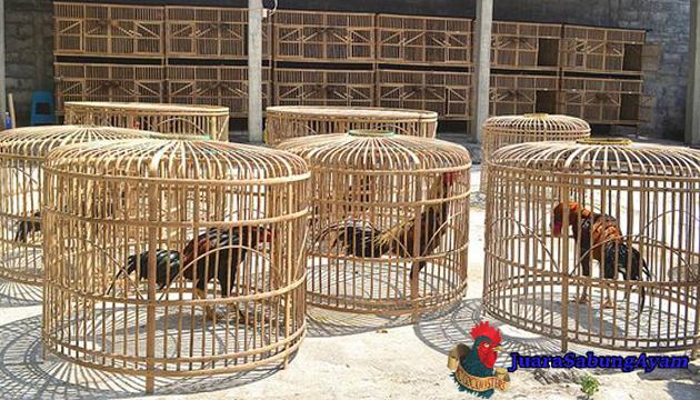 Beberapa Manfaat Menjemur Ayam Bangkok