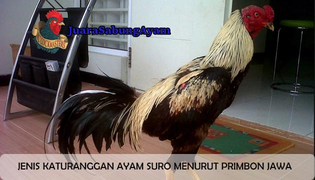 Katuranggan Ayam Suro