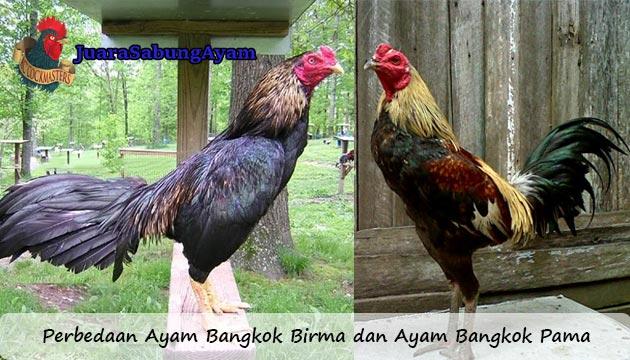 perbedaan birma dan pama