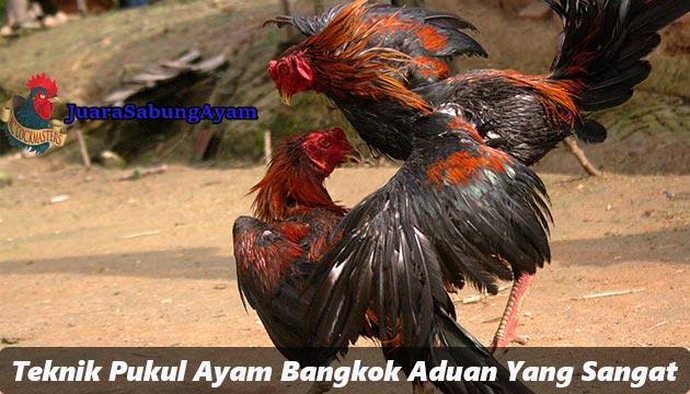 Teknik Pukul Ayam Bangkok