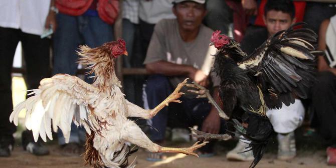 Plus Minus Ayam Bangkok