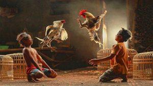 Merawat Ayam Bali