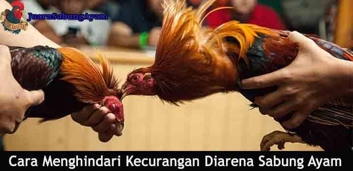 cara menghindari kecurangan diarena sabung ayam