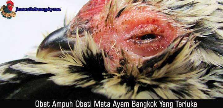 Obat Ampuh Obati Mata Ayam Bangkok Yang Terluka