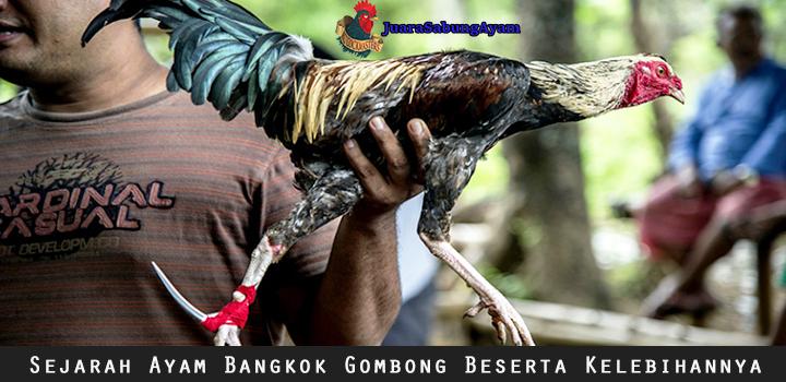 Sejarah Ayam Bangkok Gombong Beserta Kelebihannya