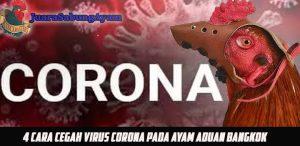 4 Cara Cegah Virus Corona Pada Ayam Aduan Bangkok