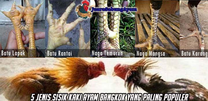 5 Jenis Sisik Kaki Ayam Bangkok Yang Paling Populer
