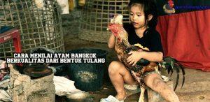 Cara Menilai Ayam Bangkok Berkualitas Dari Bentuk Tulang