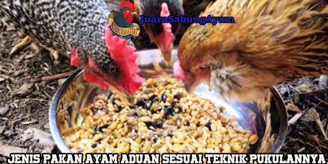 Jenis Pakan Ayam Aduan Sesuai Teknik Pukulan