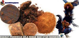 Khasiat Pemberian Gula Merah Bagi Ayam Bangkok