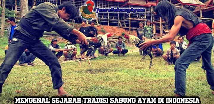 Mengenal Sejarah Tradisi Sabung Ayam di Indonesia