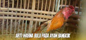 Arti Warna Bulu Pada Ayam Bangkok