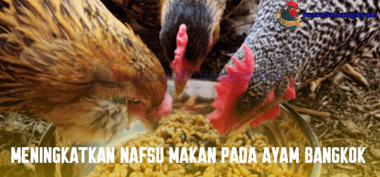 Meningkatkan Nafsu Makan Pada Ayam Bangkok
