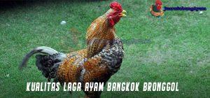 Kualitas Laga Ayam Bangkok Bronggol