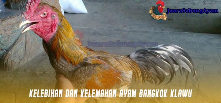 Kelebihan Dan Kelemahan Ayam Bangkok Klawu