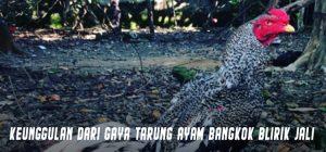 Keunggulan Dari Gaya Tarung Ayam Bangkok Blirik Jali