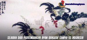 Sejarah Dari Perkembangan Ayam Bangkok Sampai Ke Indonesia