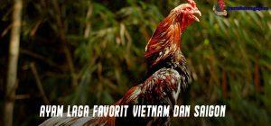 Ayam Laga Favorit Vietnam dan Saigon