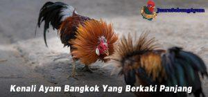 Kenali Ayam Bangkok Yang Berkaki Panjang