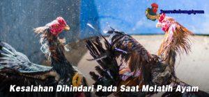 Kesalahan Dihindari Pada Saat Melatih Ayam