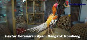 Faktor Ketenaran Ayam Bangkok Gombong