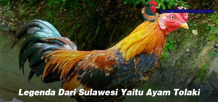 Legenda Dari Sulawesi Yaitu Ayam Tolaki