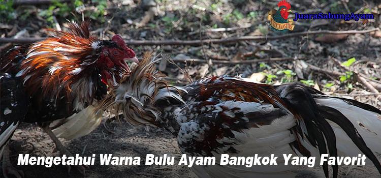 Mengetahui Warna Bulu Ayam Bangkok Yang Favorit