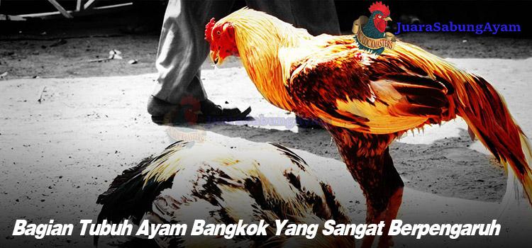 Bagian Tubuh Ayam Bangkok Yang Sangat Berpengaruh