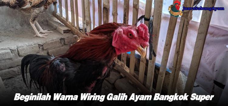 Beginilah Warna Wiring Galih Ayam Bangkok Super