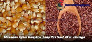Makanan Ayam Bangkok Yang Pas Saat Akan Berlaga