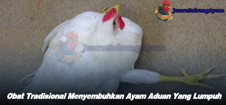 Obat Tradisional Menyembuhkan Ayam Aduan Yang Lumpuh