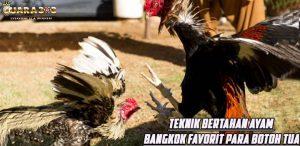 Teknik Bertahan Ayam Bangkok Favorit Para Botoh Tua