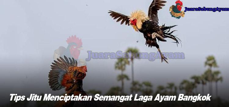 Tips Jitu Menciptakan Semangat Laga Ayam Bangkok