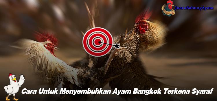 Cara Untuk Menyembuhkan Ayam Bangkok Terkena Syaraf